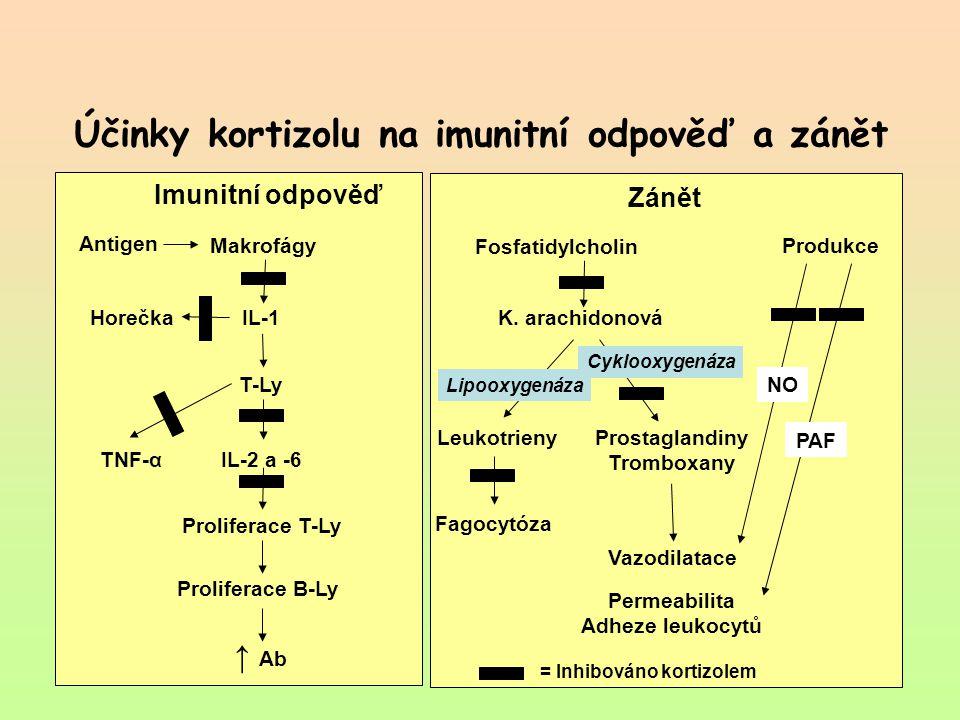 Účinky kortizolu na imunitní odpověď a zánět