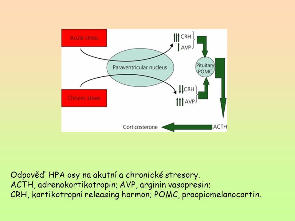 Odpověď HPA osy na akutní a chronické stresory.
