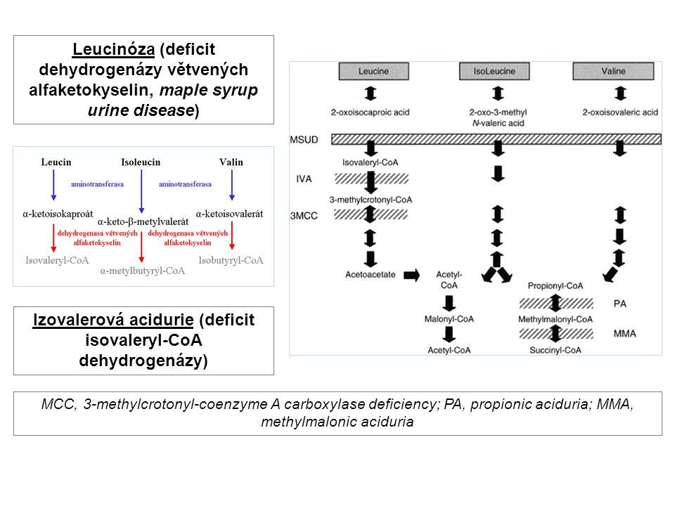 Izovalerová acidurie (deficit isovaleryl-CoA dehydrogenázy)