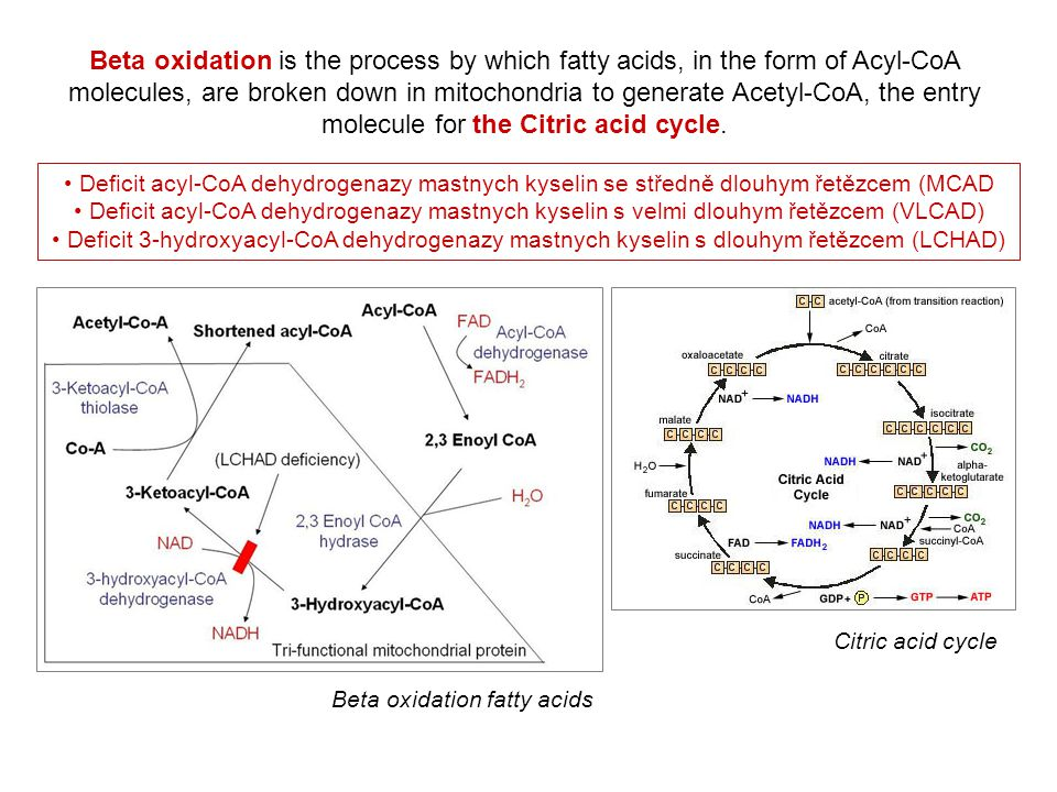 Beta oxidation fatty acids