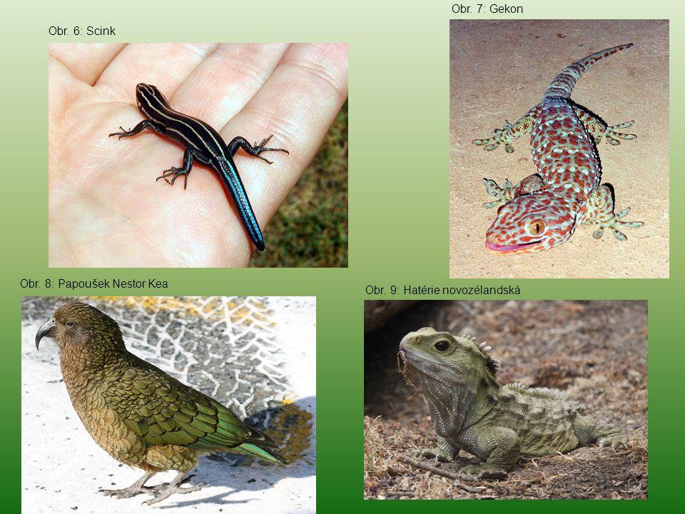 Obr. 7: Gekon Obr. 6: Scink Obr. 8: Papoušek Nestor Kea Obr. 9: Hatérie novozélandská