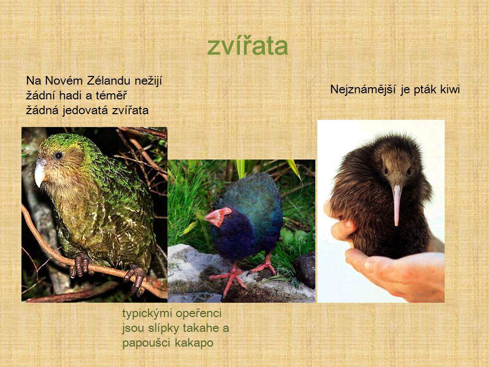 zvířata Na Novém Zélandu nežijí žádní hadi a téměř žádná jedovatá zvířata. Nejznámější je pták kiwi.