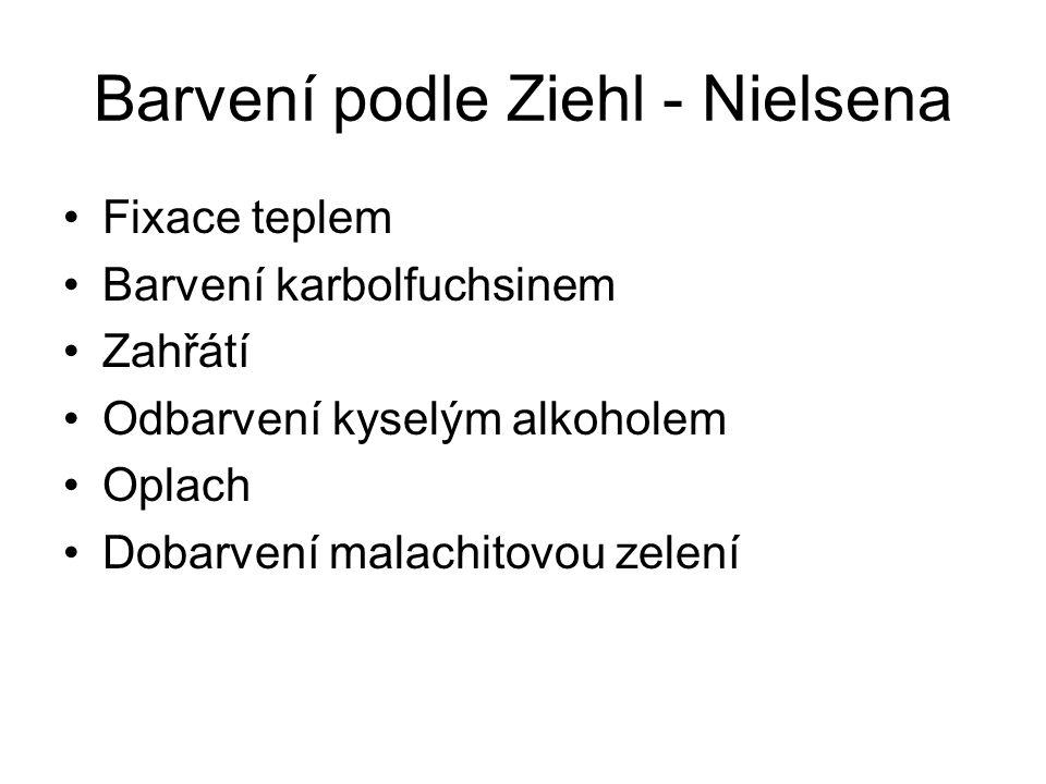 Barvení podle Ziehl - Nielsena