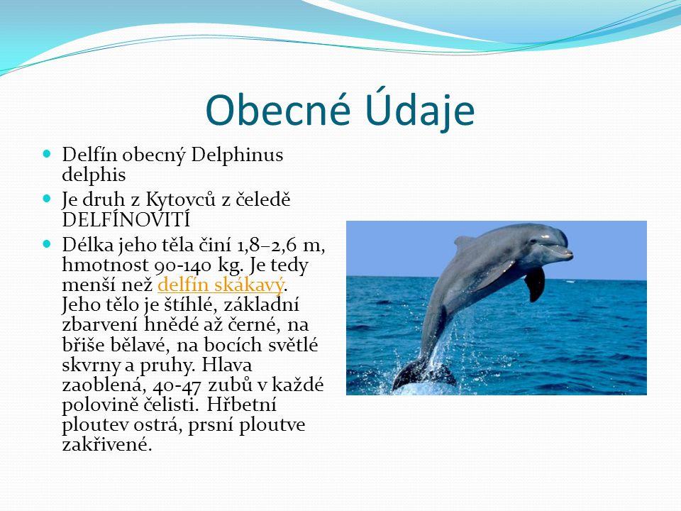Obecné Údaje Delfín obecný Delphinus delphis