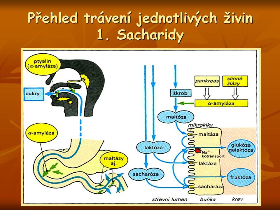 Přehled trávení jednotlivých živin 1. Sacharidy