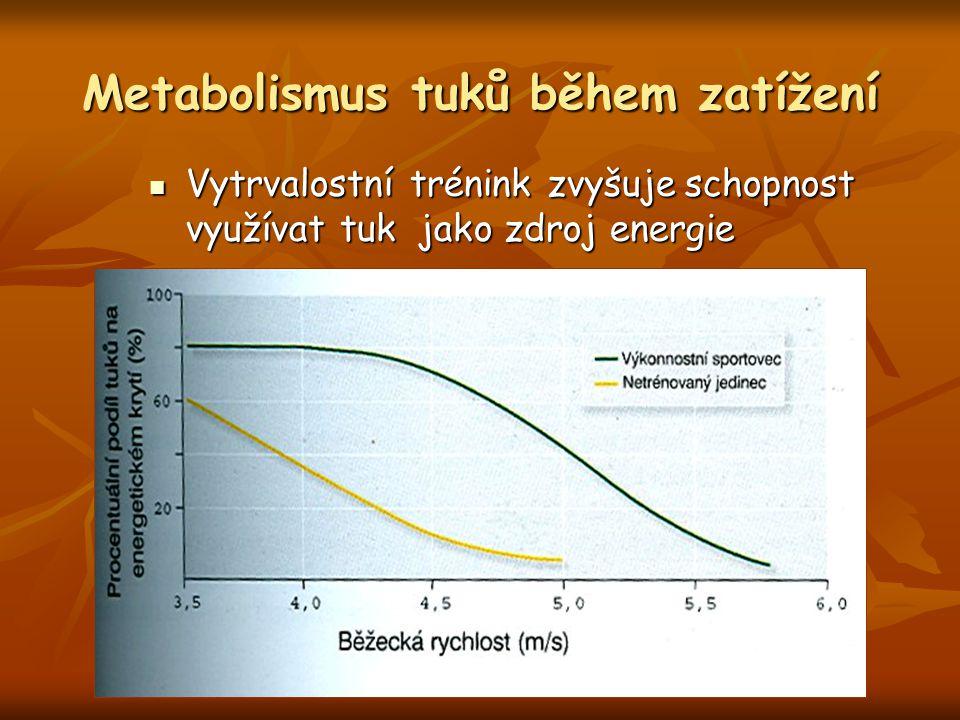 Metabolismus tuků během zatížení
