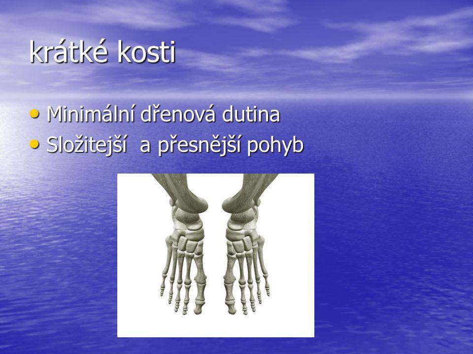 krátké kosti Minimální dřenová dutina Složitejší a přesnější pohyb