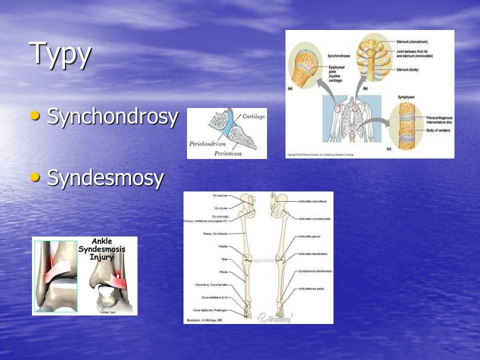 Typy Synchondrosy Syndesmosy