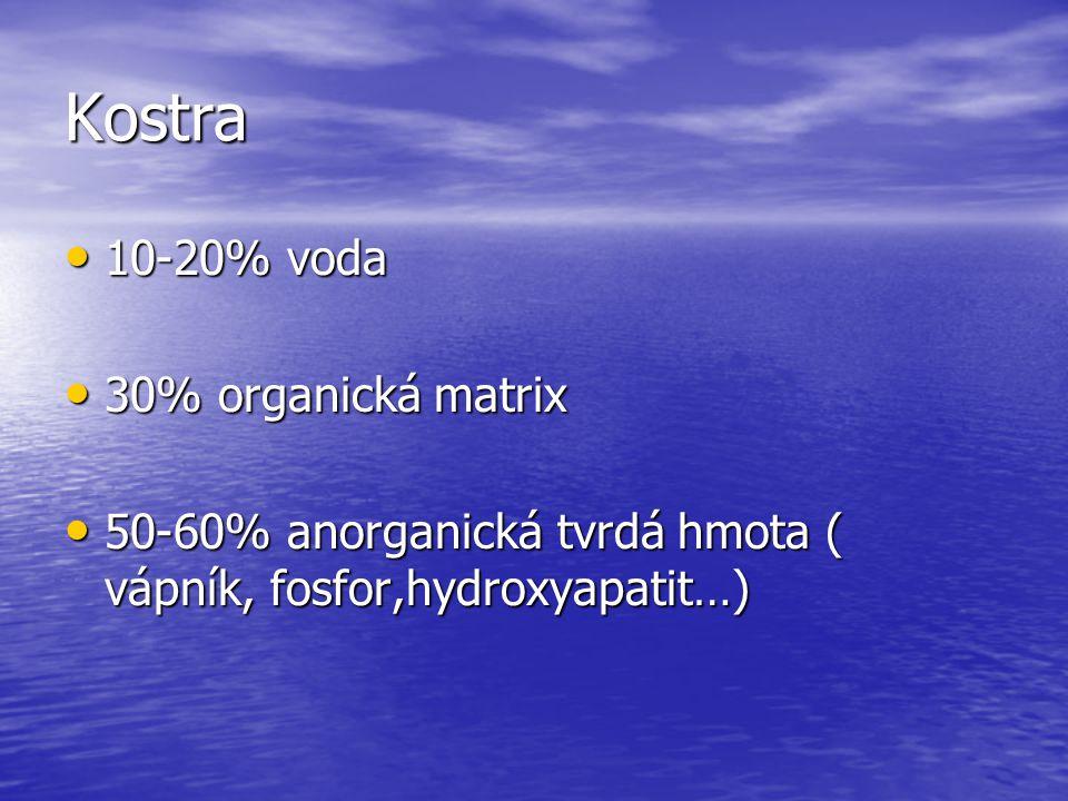 Kostra 10-20% voda 30% organická matrix