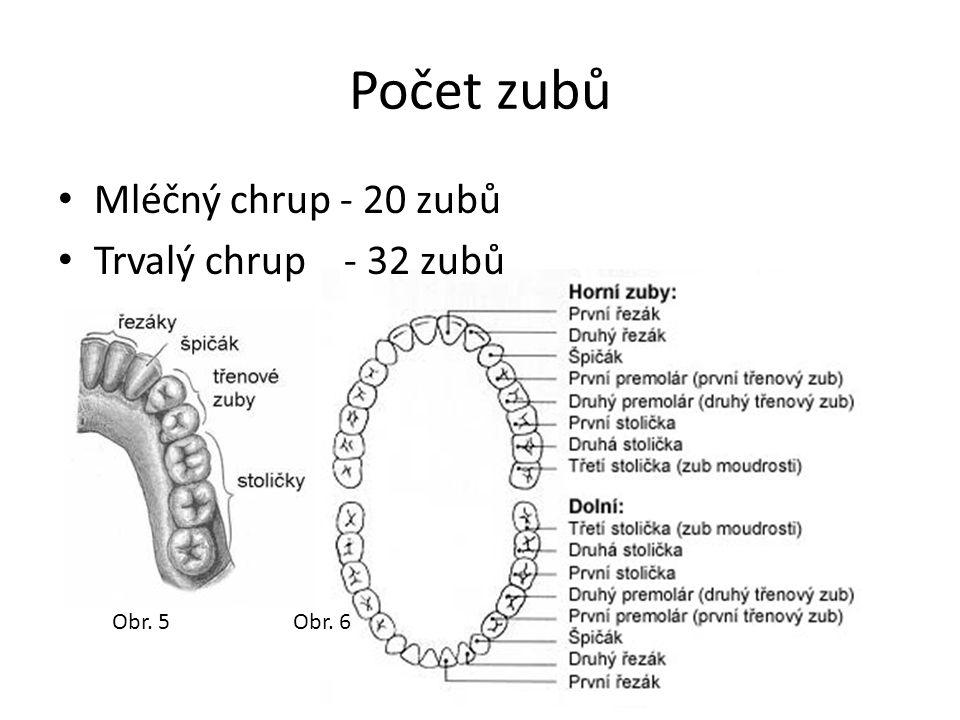 Počet zubů Mléčný chrup - 20 zubů Trvalý chrup - 32 zubů Obr. 5 Obr. 6
