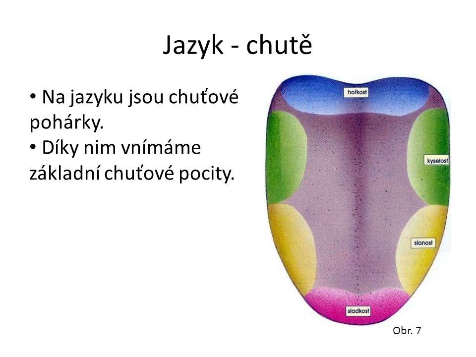 Jazyk - chutě Na jazyku jsou chuťové pohárky.