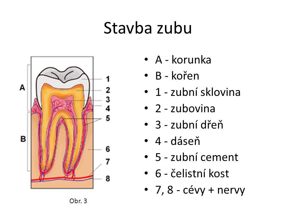 Stavba zubu A - korunka B - kořen 1 - zubní sklovina 2 - zubovina