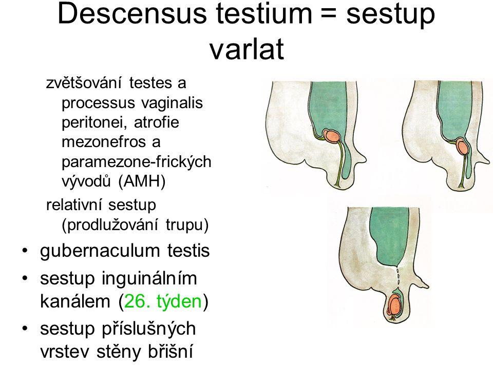 Descensus testium = sestup varlat