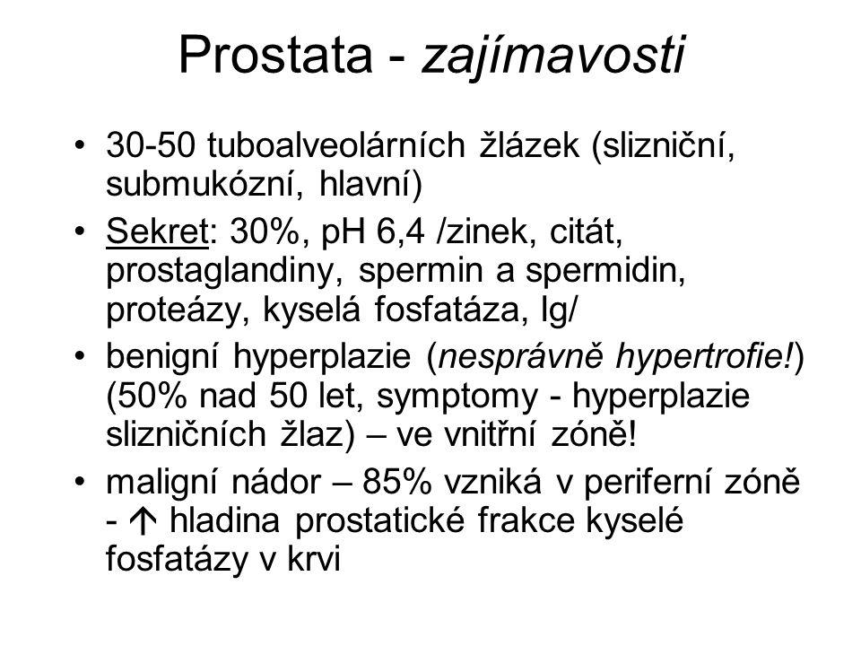 Prostata - zajímavosti