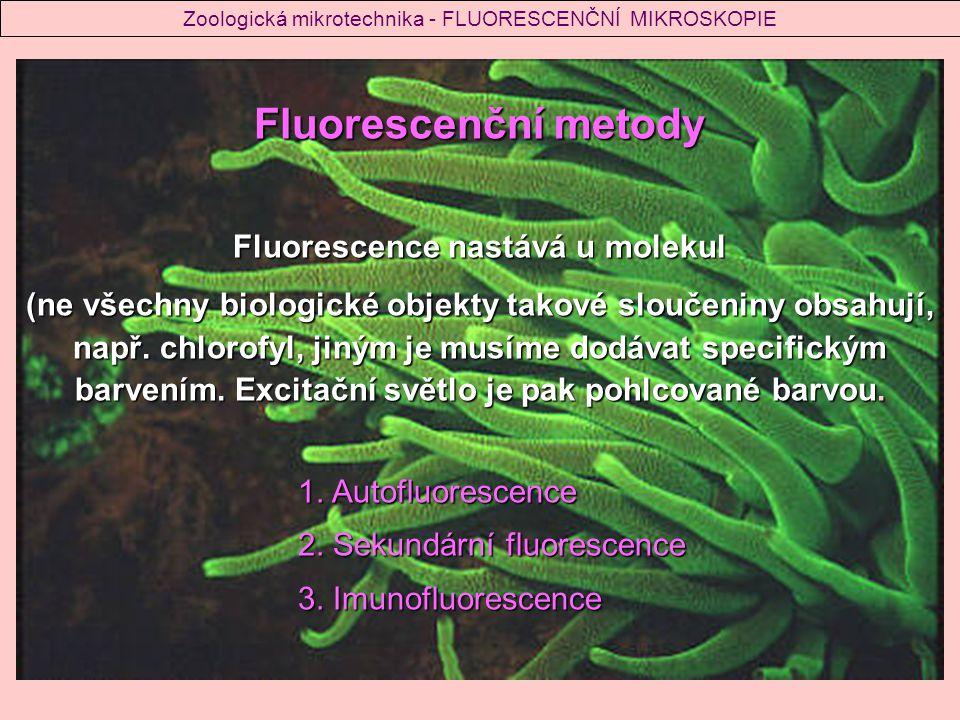 Fluorescence nastává u molekul