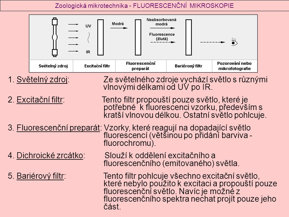 Zoologická mikrotechnika - FLUORESCENČNÍ MIKROSKOPIE