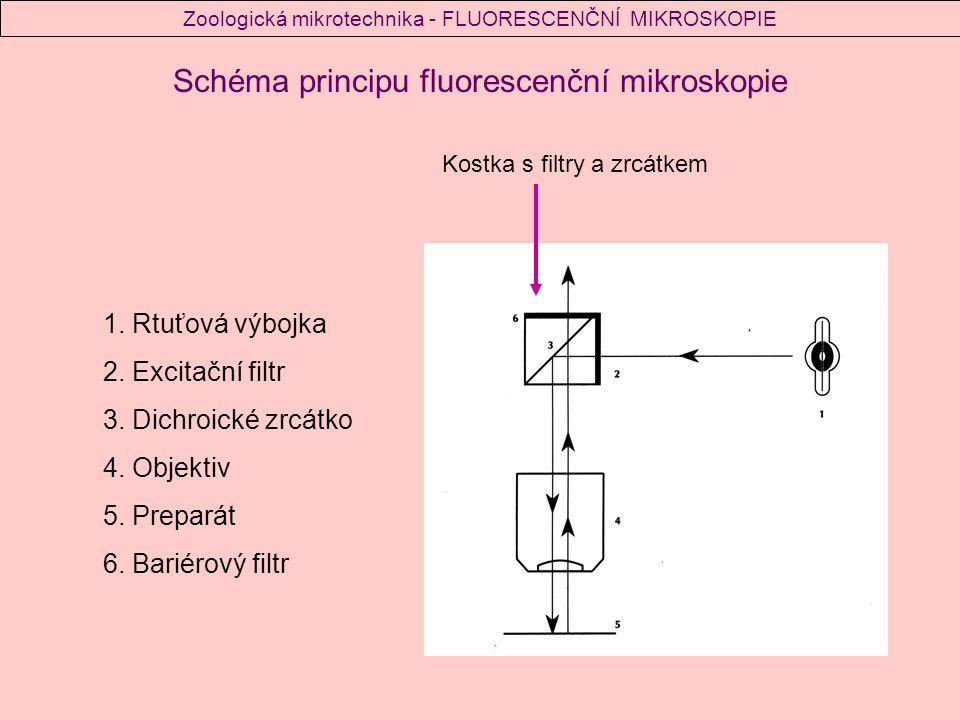 Schéma principu fluorescenční mikroskopie