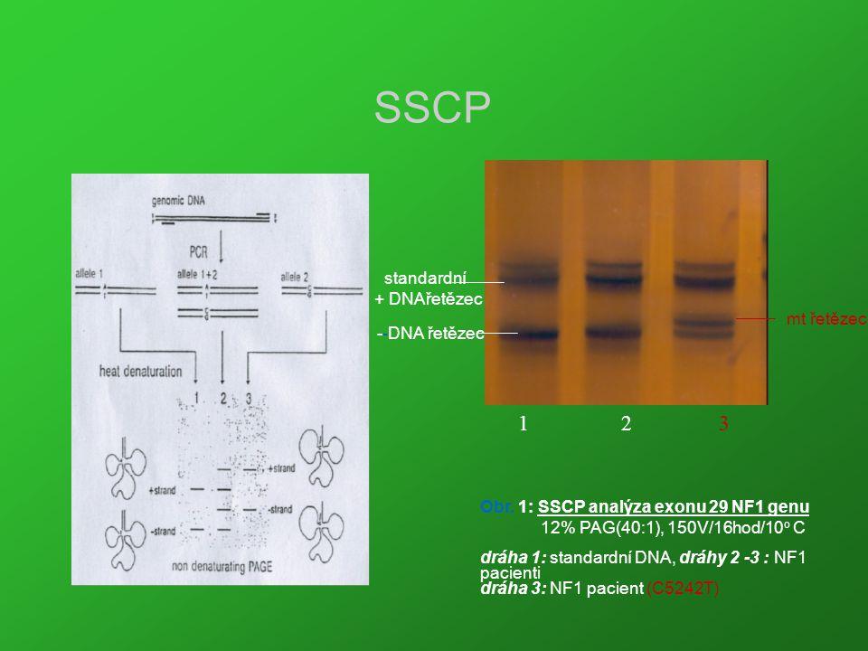SSCP 1 2 3 standardní + DNAřetězec mt řetězec --DNA řetězec