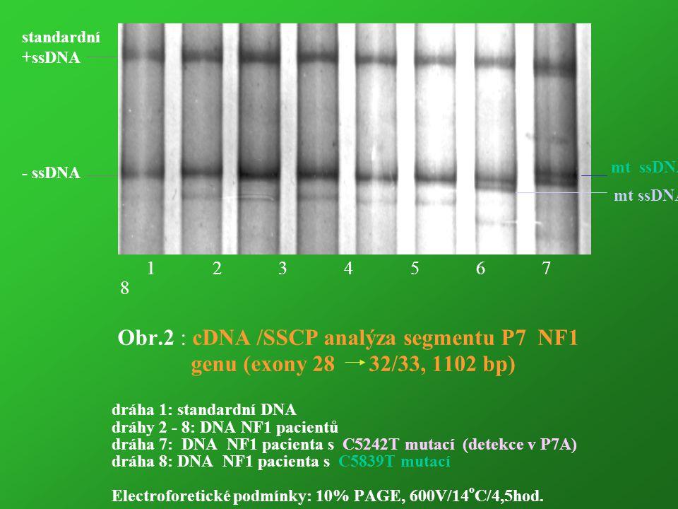 Obr.2 : cDNA /SSCP analýza segmentu P7 NF1