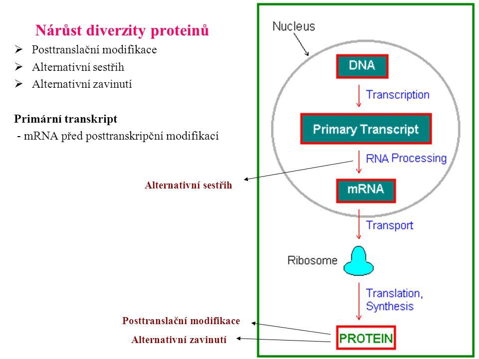 Nárůst diverzity proteinů
