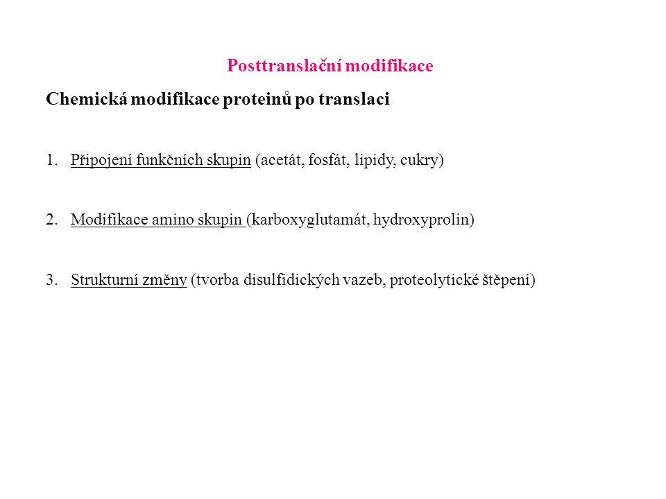 Posttranslační modifikace