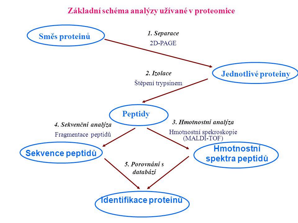 Základní schéma analýzy užívané v proteomice