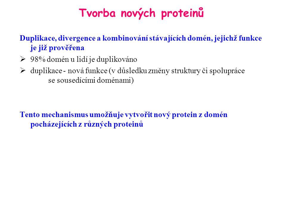 Tvorba nových proteinů