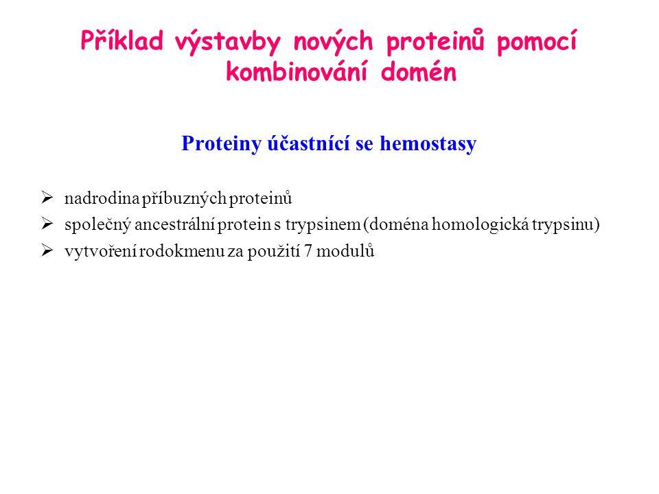 Příklad výstavby nových proteinů pomocí kombinování domén