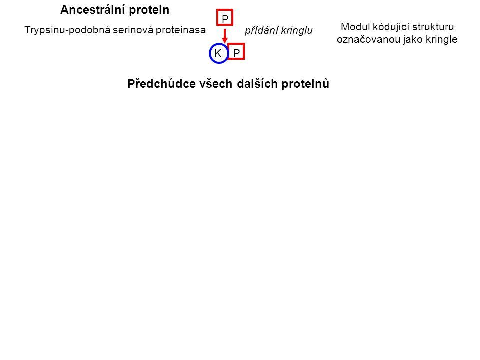 Předchůdce všech dalších proteinů
