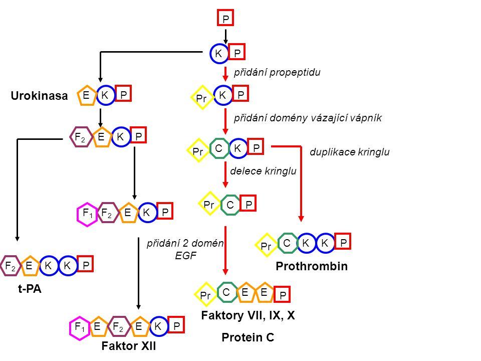 Faktory VII, IX, X Protein C