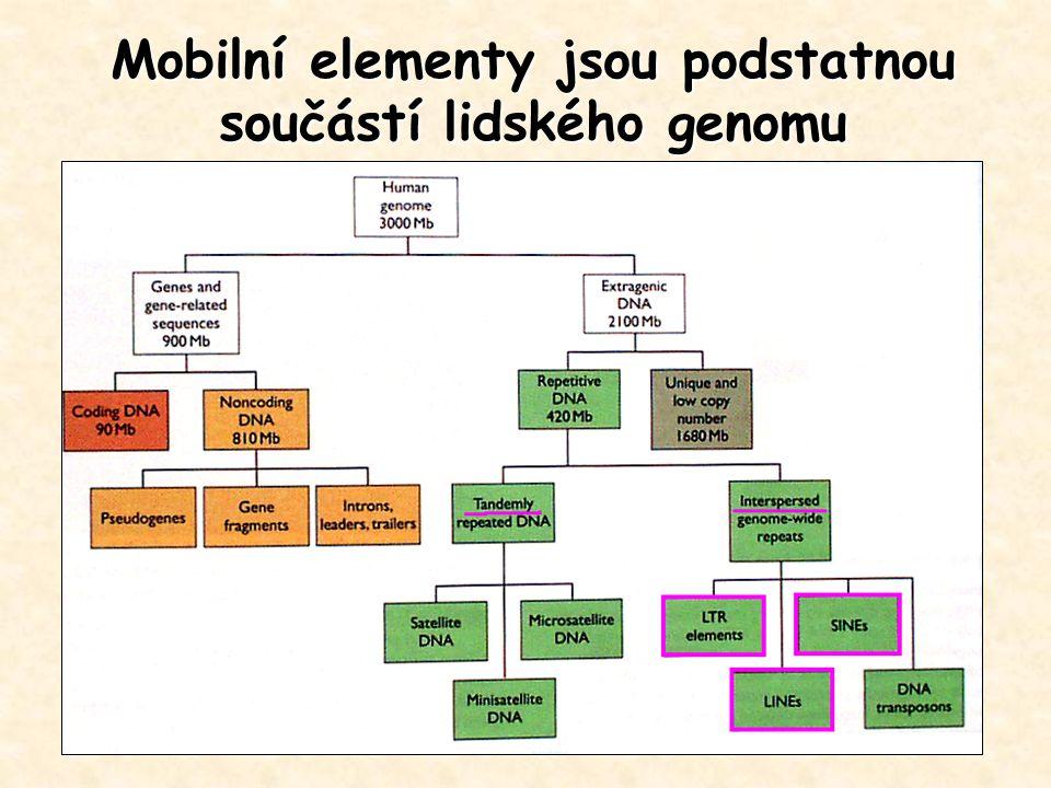 Mobilní elementy jsou podstatnou součástí lidského genomu