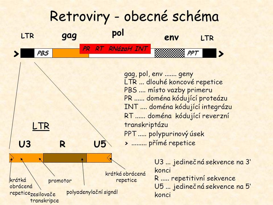 Retroviry - obecné schéma