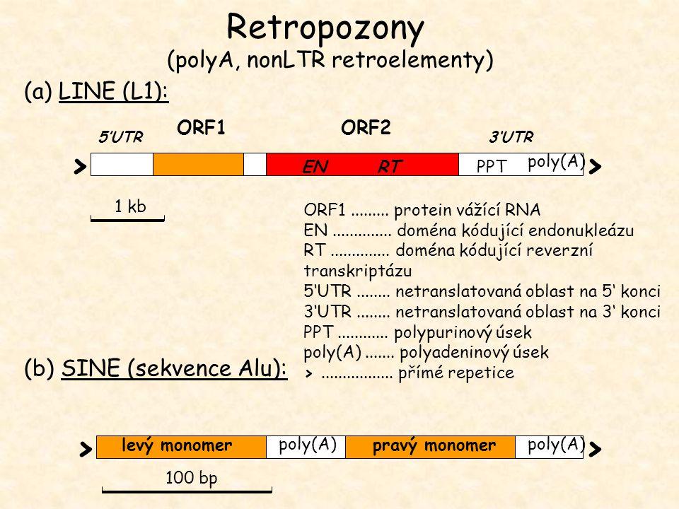 Retropozony (polyA, nonLTR retroelementy)