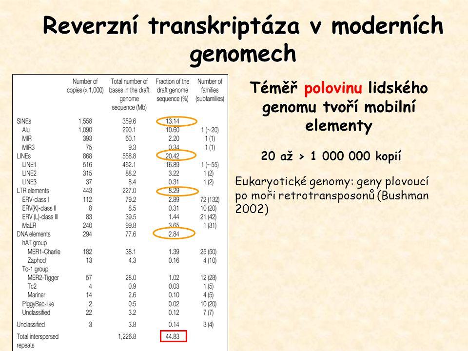 Reverzní transkriptáza v moderních genomech