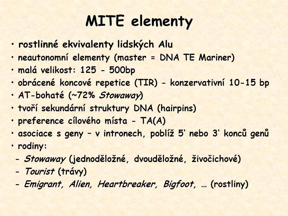 MITE elementy rostlinné ekvivalenty lidských Alu