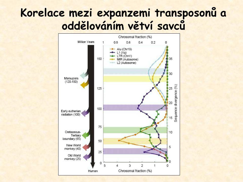 Korelace mezi expanzemi transposonů a oddělováním větví savců
