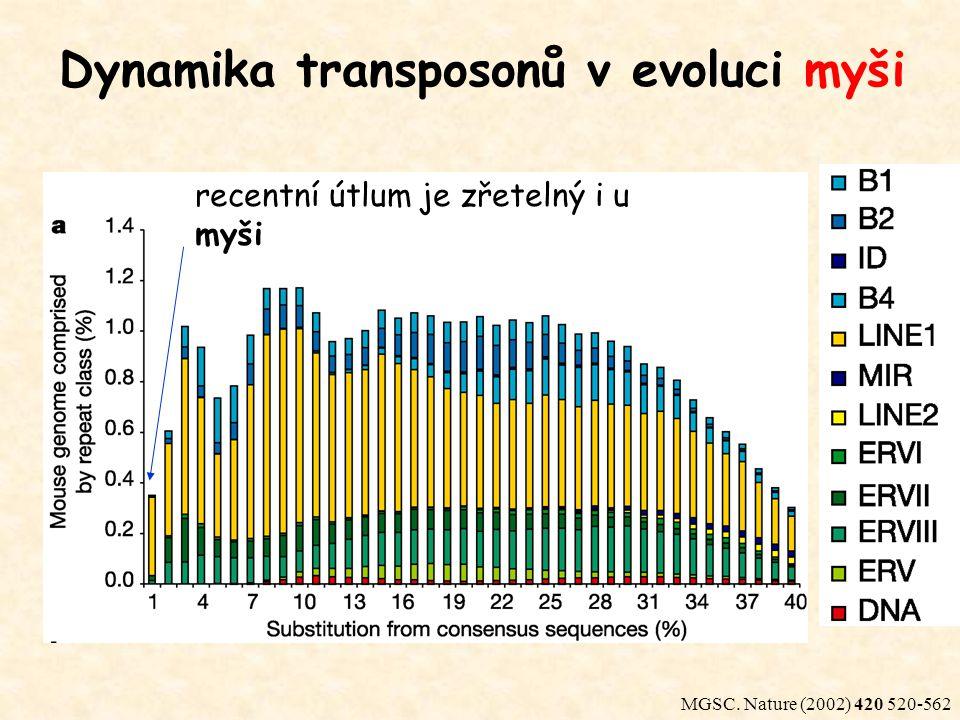 Dynamika transposonů v evoluci myši