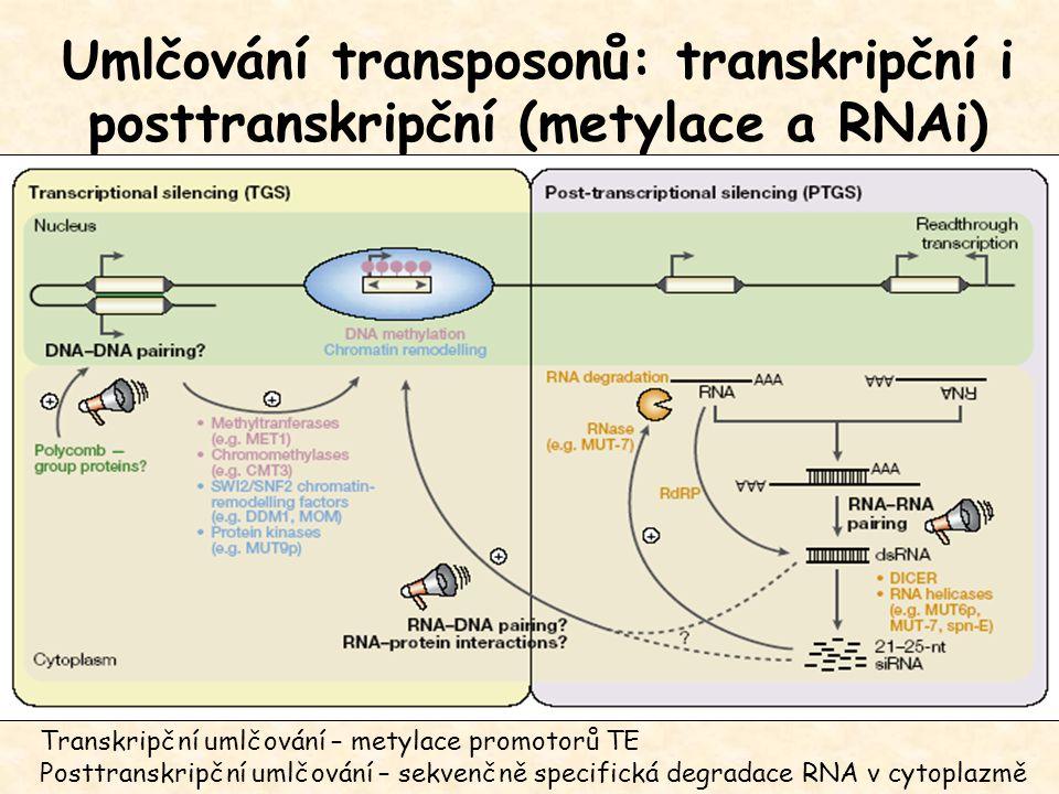 Umlčování transposonů: transkripční i posttranskripční (metylace a RNAi)