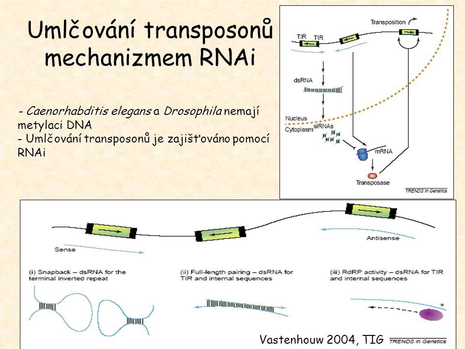 Umlčování transposonů mechanizmem RNAi
