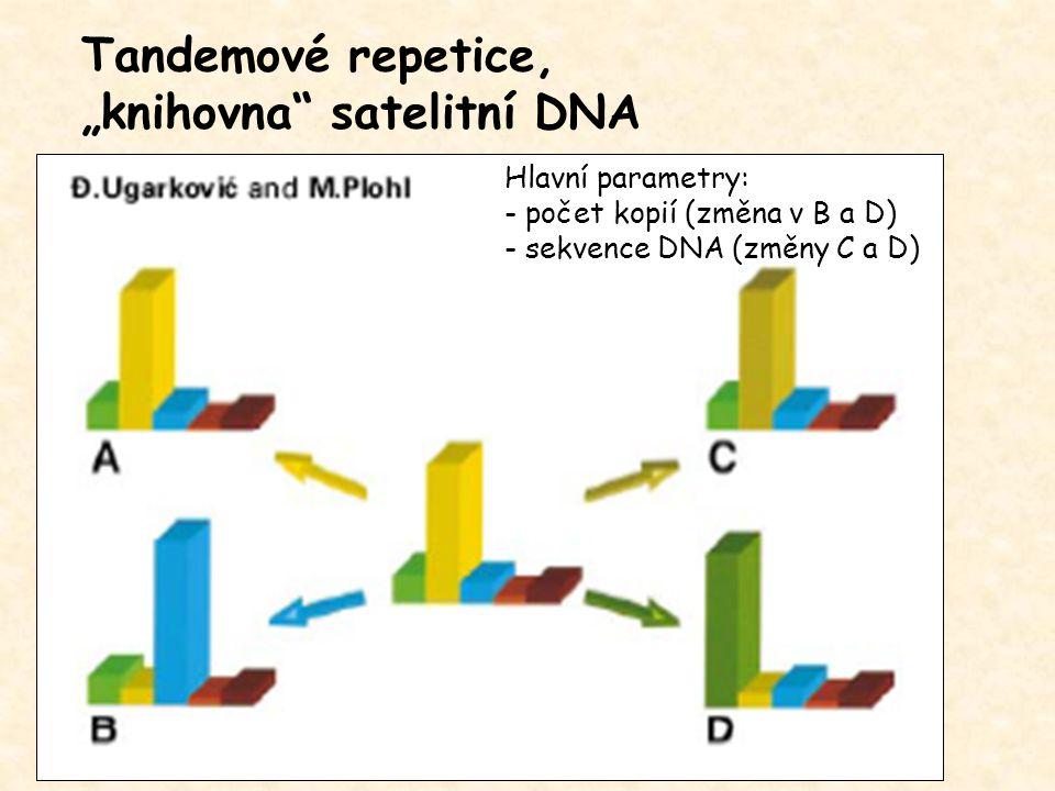 """""""knihovna satelitní DNA"""