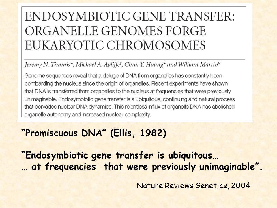 Promiscuous DNA (Ellis, 1982)