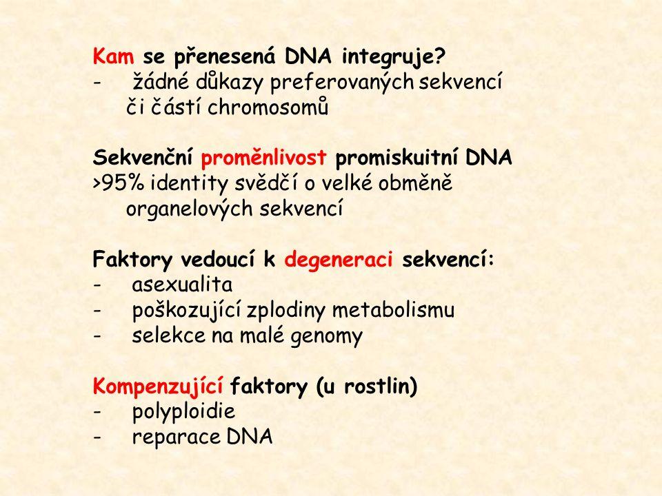 Kam se přenesená DNA integruje