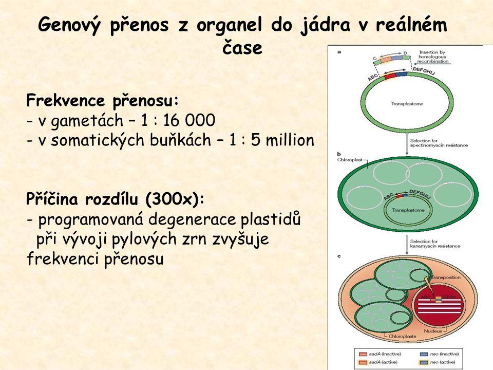 Genový přenos z organel do jádra v reálném čase