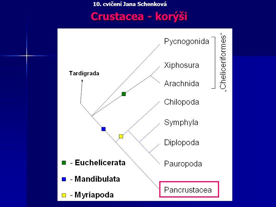 Crustacea - korýši 10. cvičení Jana Schenková
