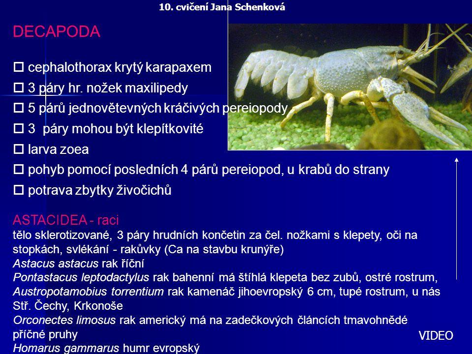 DECAPODA cephalothorax krytý karapaxem 3 páry hr. nožek maxilipedy