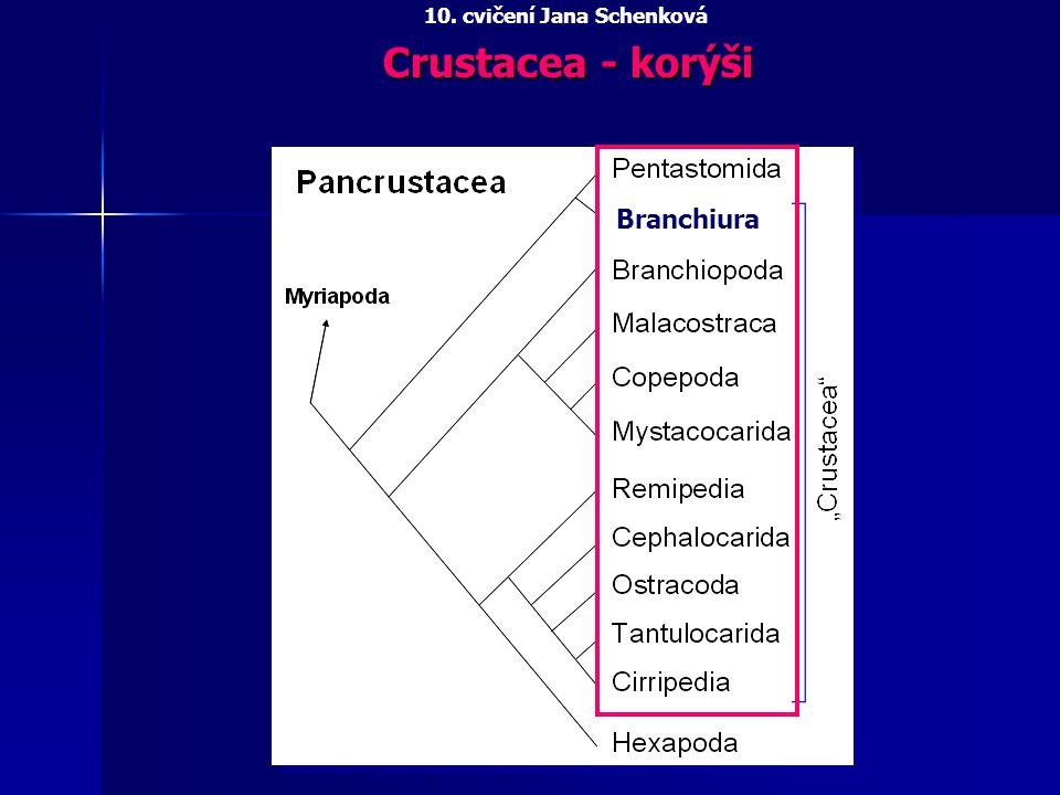 Crustacea - korýši 10. cvičení Jana Schenková Branchiura