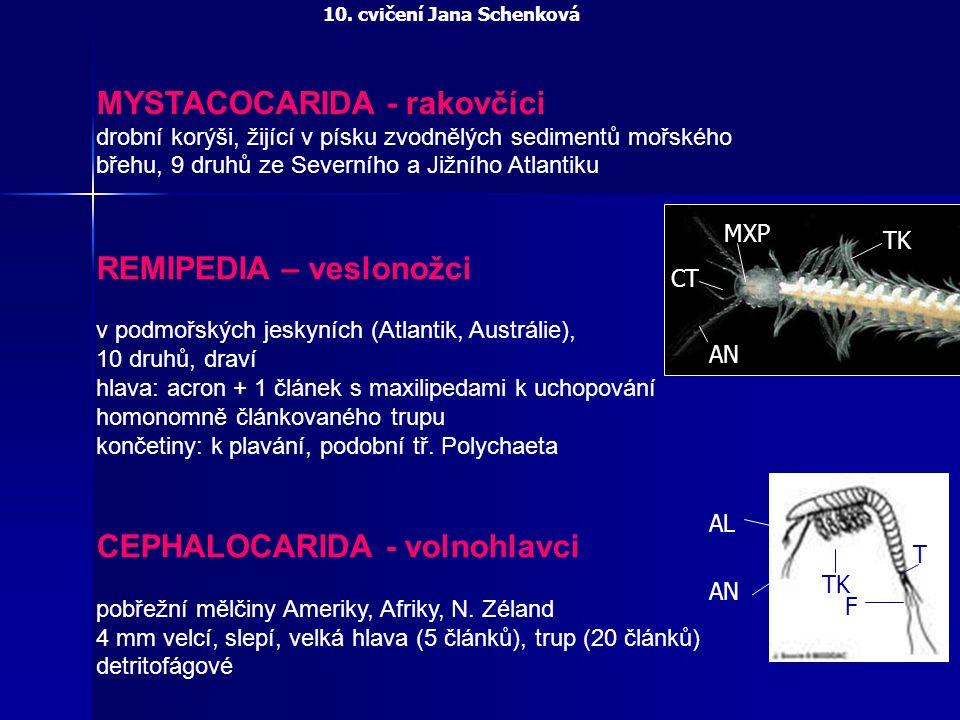 MYSTACOCARIDA - rakovčíci