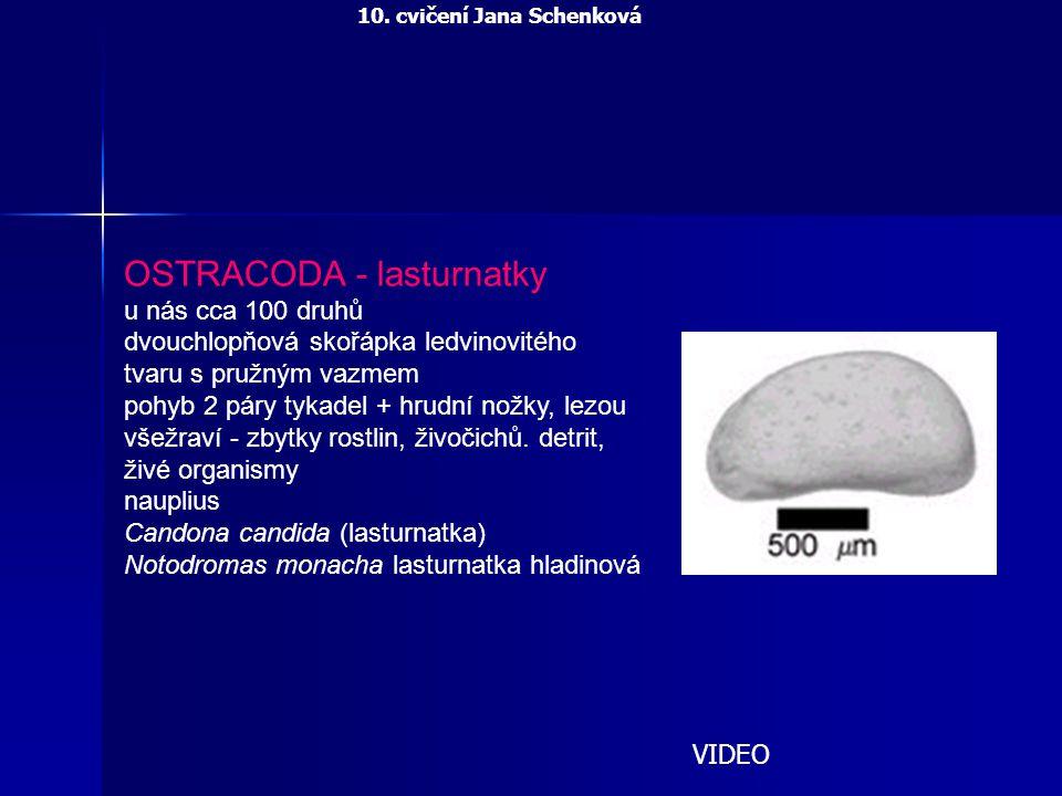 OSTRACODA - lasturnatky