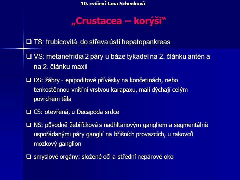 """Crustacea – korýši TS: trubicovitá, do střeva ústí hepatopankreas"