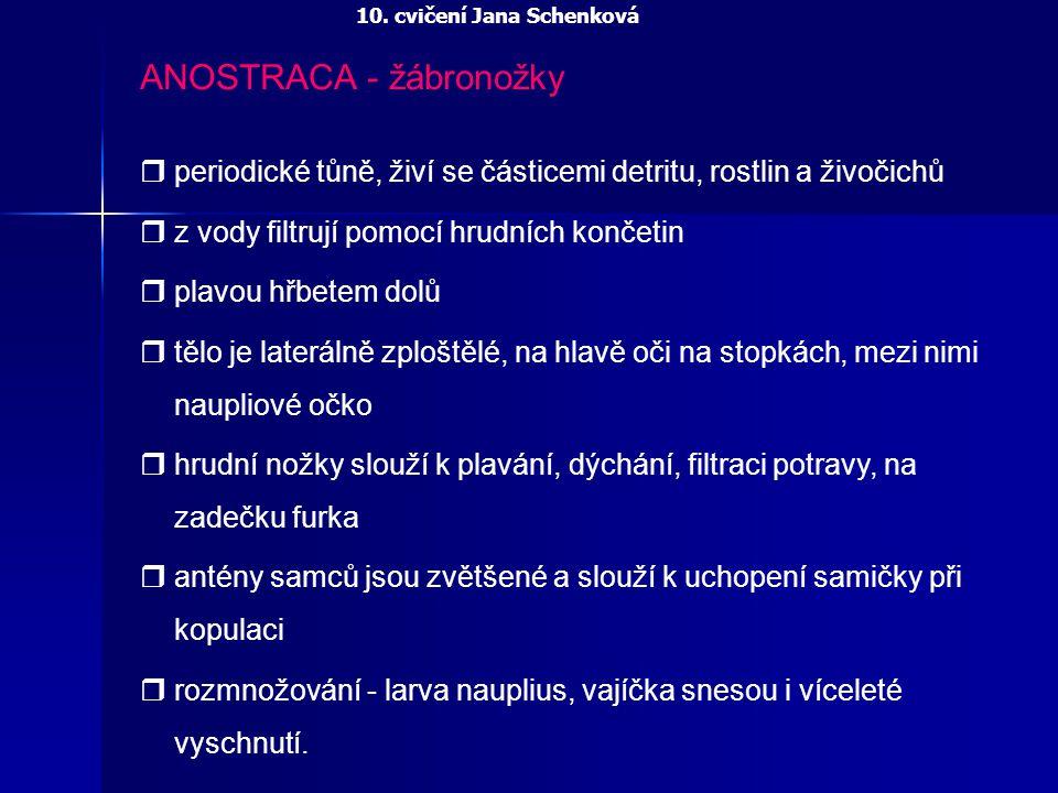 ANOSTRACA - žábronožky